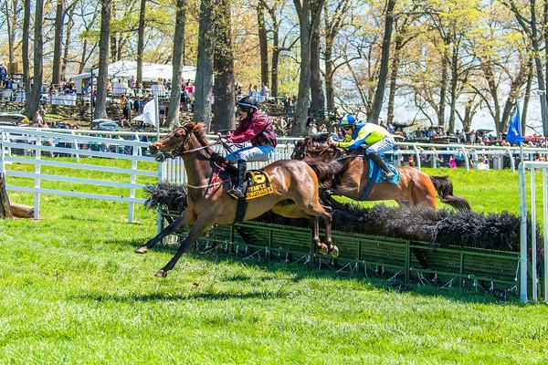 Spring Races D5-436