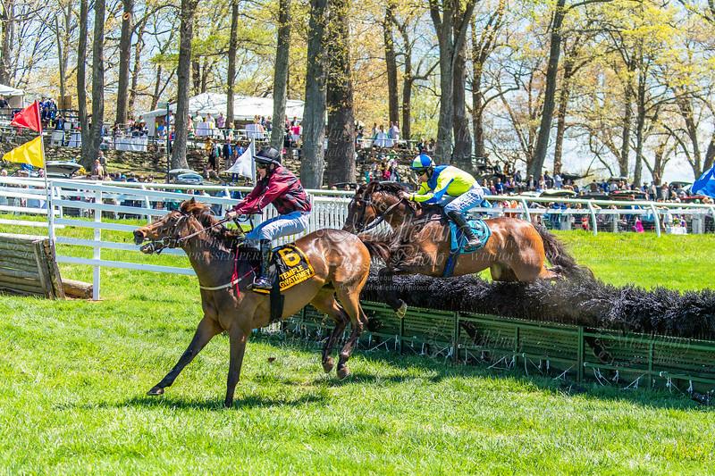 Spring Races D5-437
