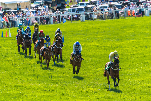 Spring Races D5-673