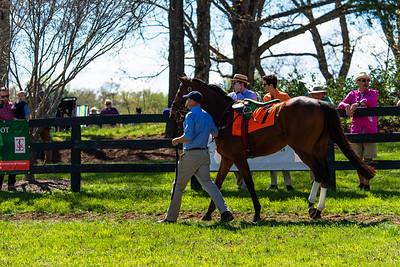 Spring Races D5-916