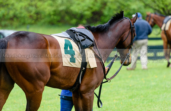Middleburg Spring Races-84