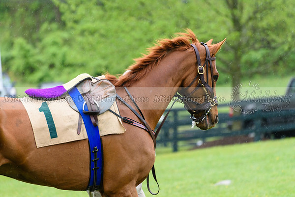 Middleburg Spring Races-168