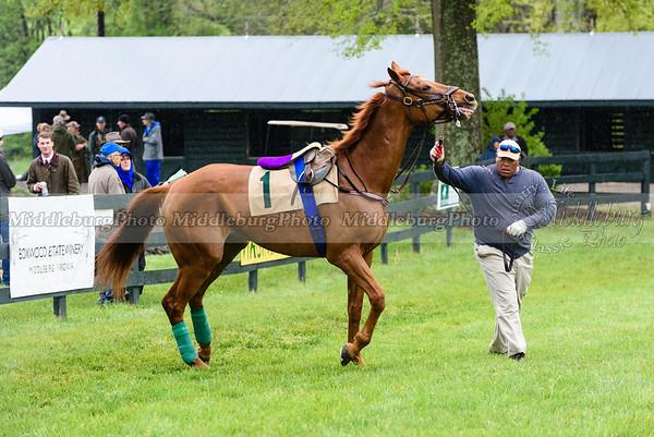 Middleburg Spring Races-162