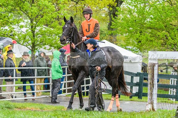 Spring Races D500-499