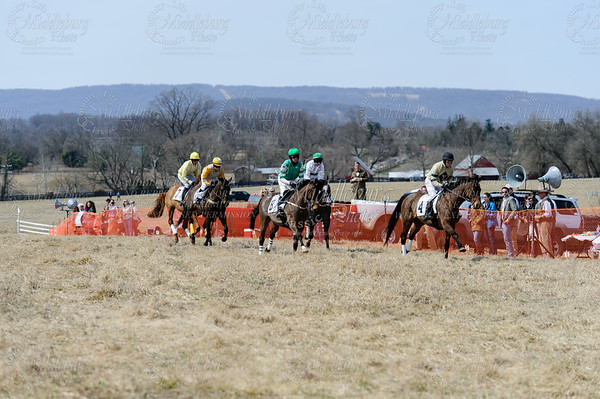 Piedmont Fox Hounds Point to Point 2014