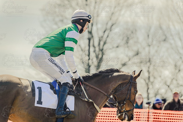 Piedmont Fox Hounds Point to Point