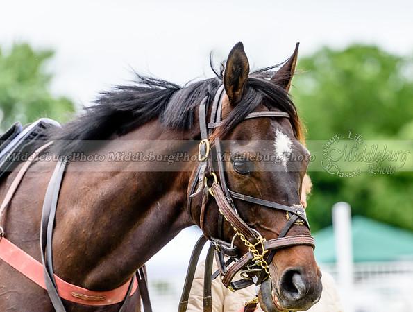 potomac races-307