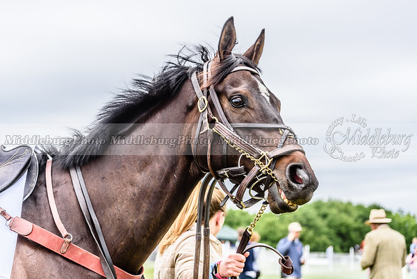potomac races-324