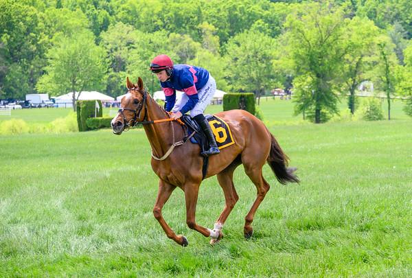 Virginia Gold cup Races-114