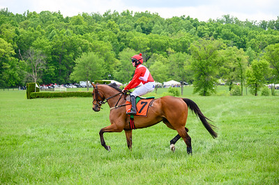 Virginia Gold Cup 2019km-168