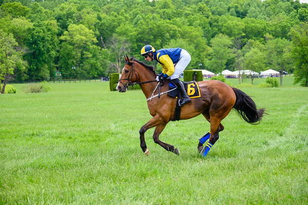 Virginia Gold Cup 2019km-165