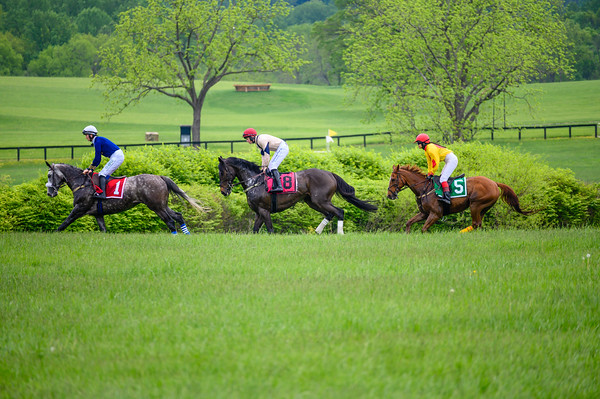 Virginia Gold Cup 2019km-170