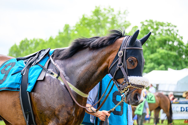 Virginia Gold Cup 2019km-305