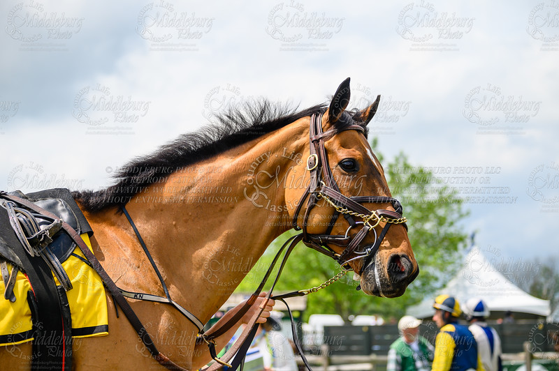 Virginia Gold Cup 2019km-328
