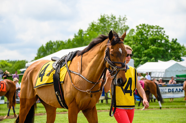 Virginia Gold Cup 2019km-322