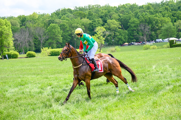 Virginia Gold Cup 2019km-342