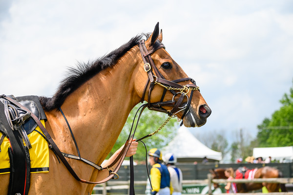 Virginia Gold Cup 2019km-329