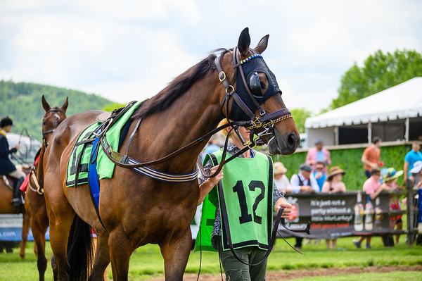 Virginia Gold Cup 2019km-314