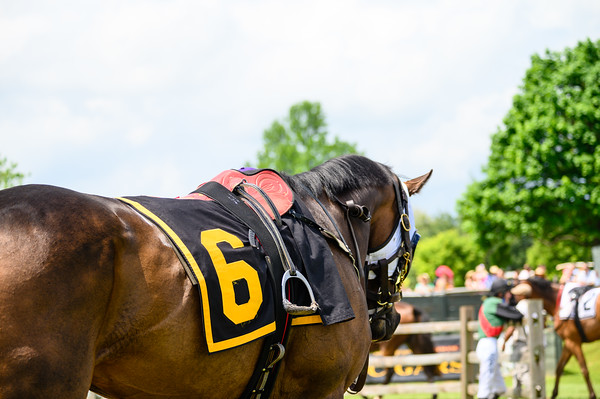Virginia Gold Cup 2019km-331