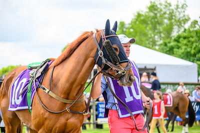 Virginia Gold Cup 2019km-309