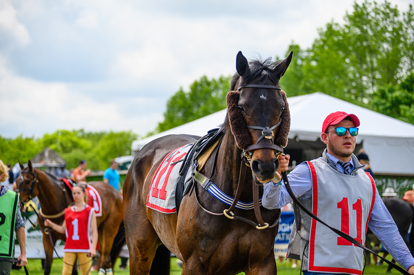 Virginia Gold Cup 2019km-312