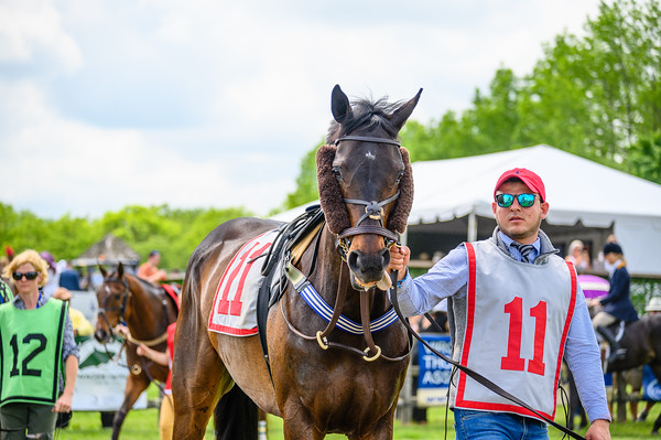 Virginia Gold Cup 2019km-311