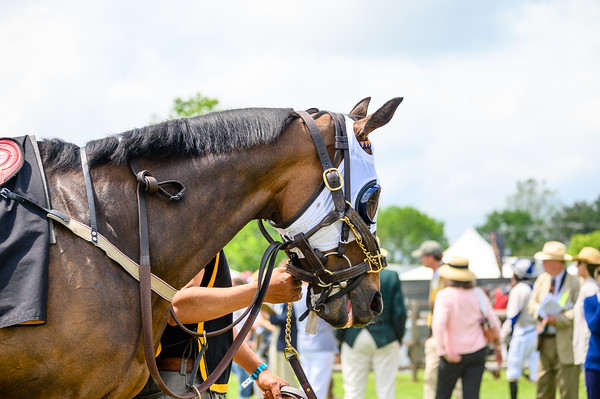 Virginia Gold Cup 2019km-330