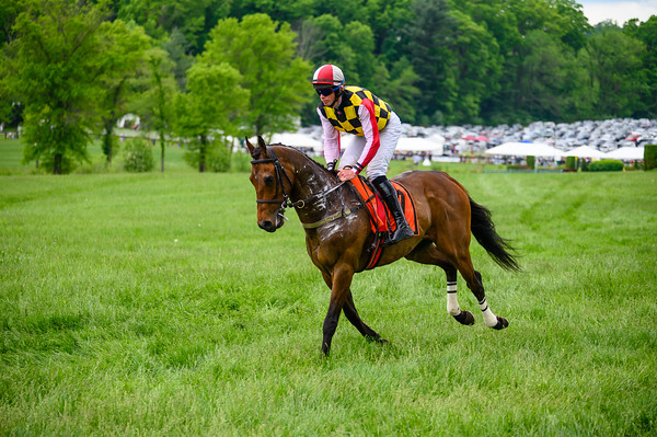 Virginia Gold Cup 2019km-521