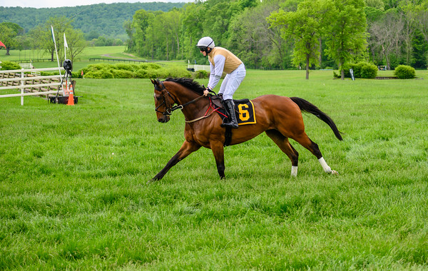 Virginia Gold Cup 2019km-519