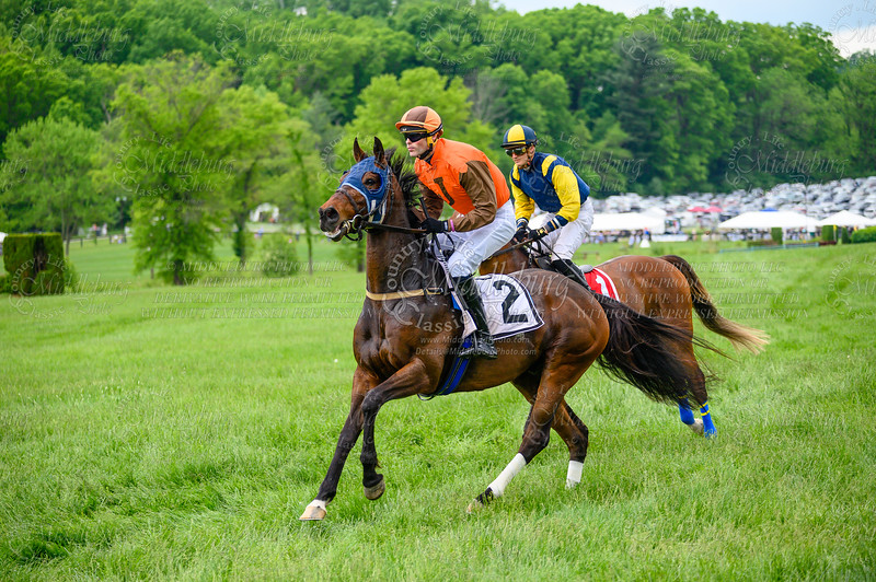 Virginia Gold Cup 2019km-501