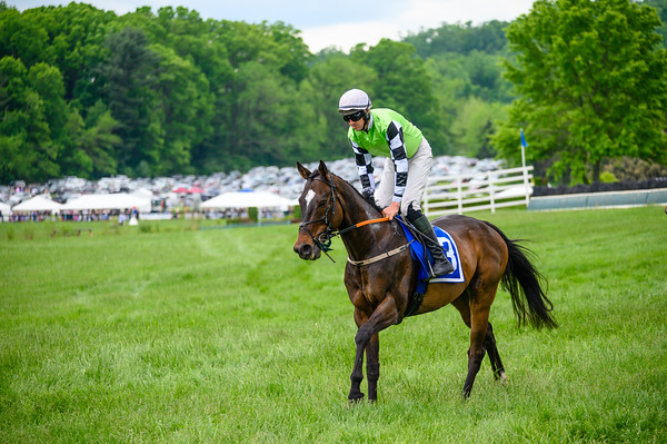 Virginia Gold Cup 2019km-512