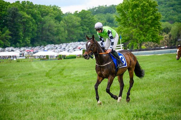 Virginia Gold Cup 2019km-511