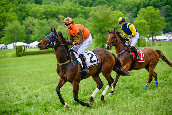 Virginia Gold Cup 2019km-503