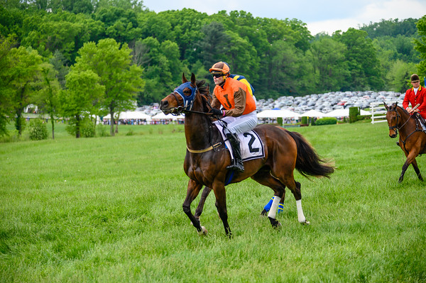 Virginia Gold Cup 2019km-500