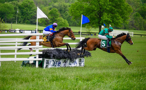 Virginia Gold Cup 2019km-706