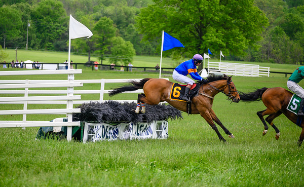Virginia Gold Cup 2019km-707