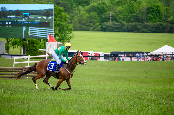 Virginia Gold Cup 2019km-699