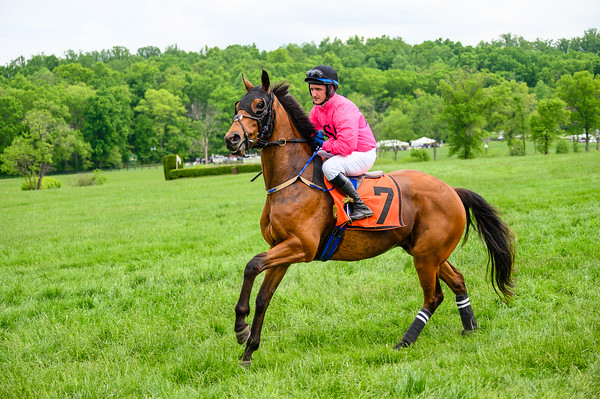 Virginia Gold Cup 2019km-774