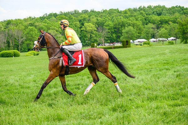 Virginia Gold Cup 2019km-752