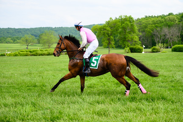 Virginia Gold Cup 2019km-767