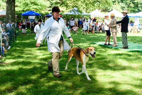 VA Foxhound Show km-46