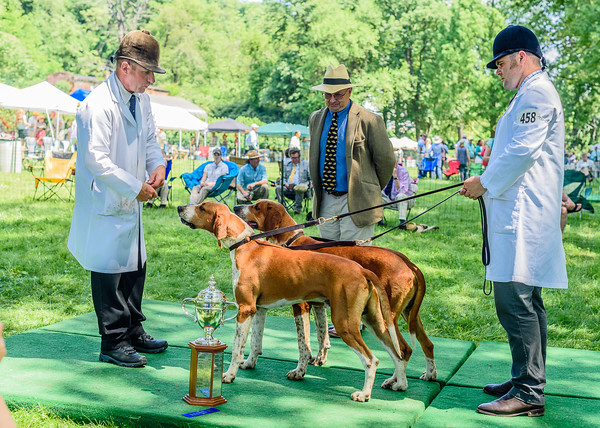 VA Foxhound Show km-13