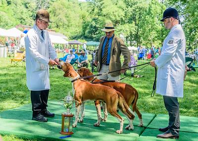 VA Foxhound Show km-14