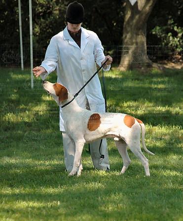 Virginia Foxhound Show