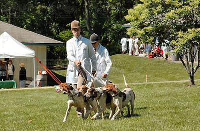 Virginia Foxhound Show, 2008