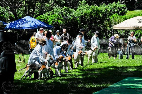 Virginia Foxhound Show-9
