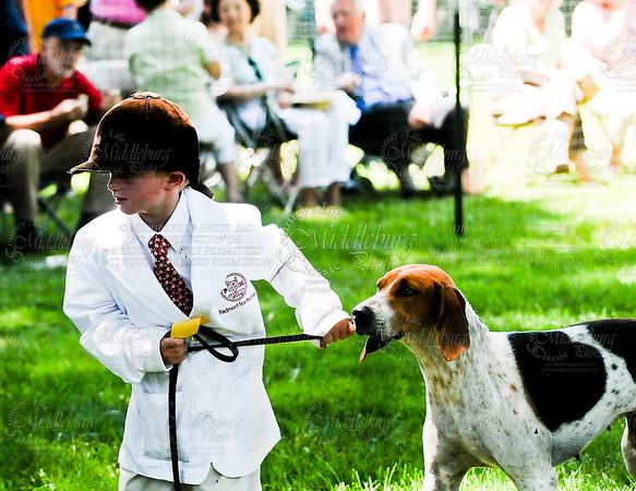 Virginia Foxhound Show-3