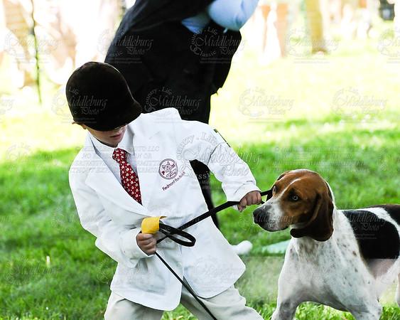 Virginia Foxhound Show-2