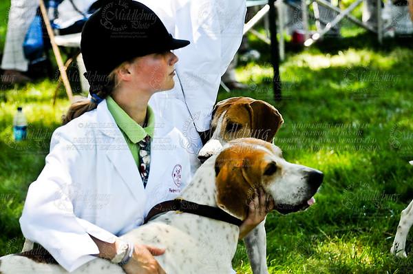 Virginia Foxhound Show-10