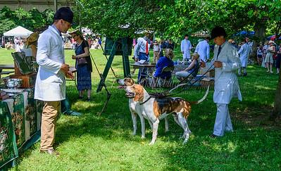 VA Foxhound Show-20